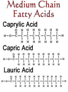 Fatty+Acid+Structures